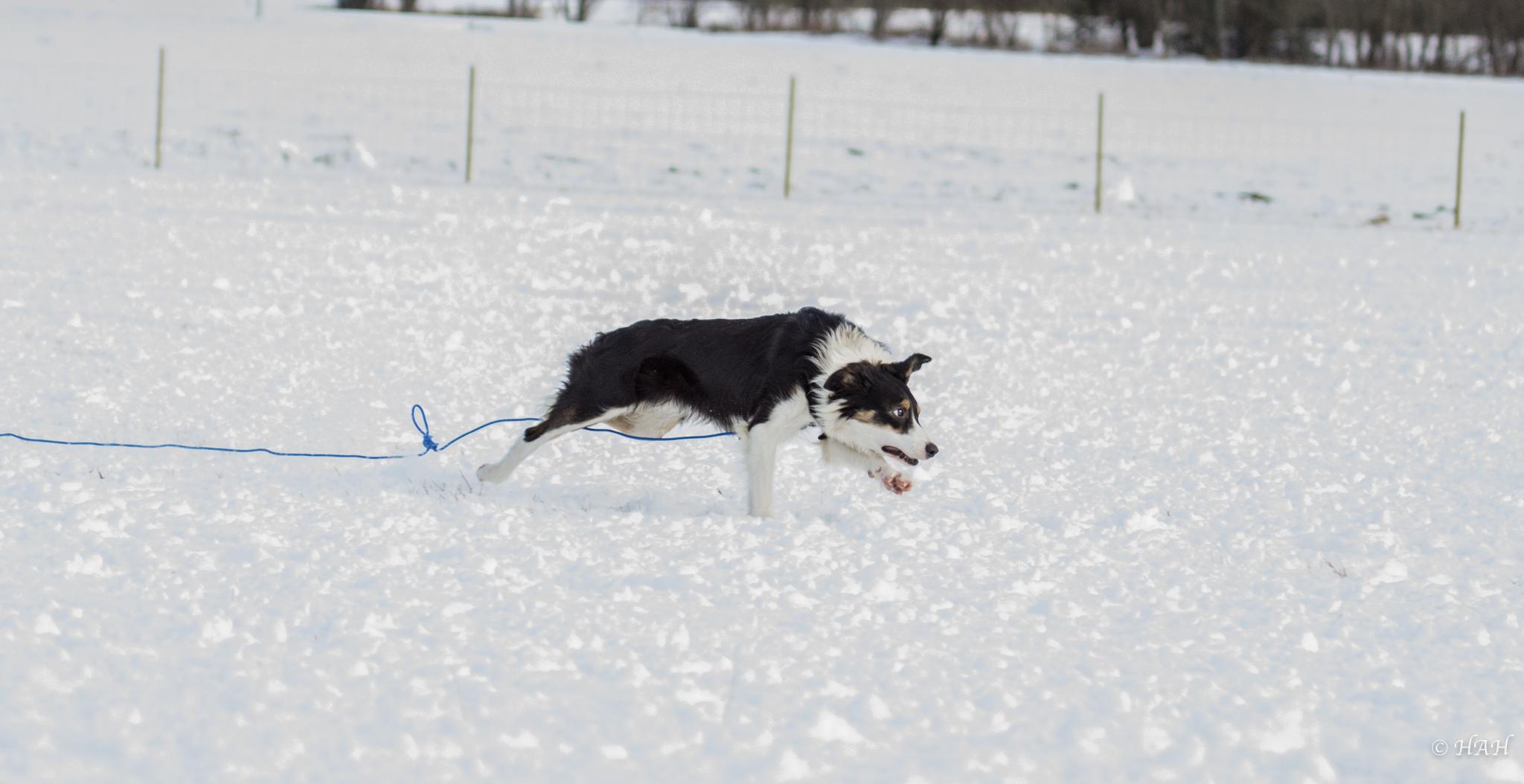 Millies hund1